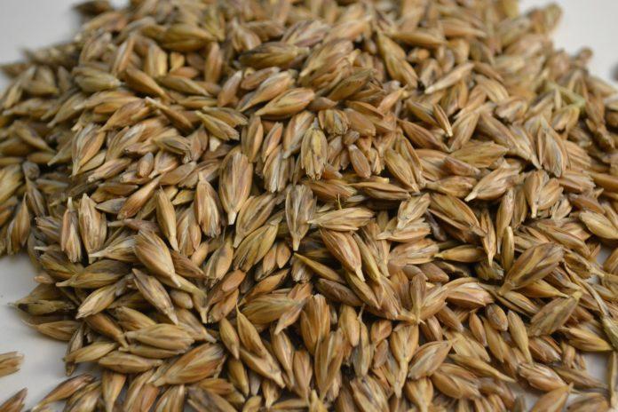 Farro: il cereale dell'estate ricco di proteine e sali minerali